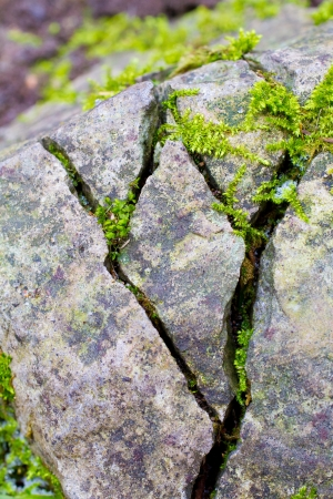 Some stones have big cracks in them and moss plantlife is growing out of the cracks.