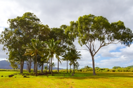 birthing: A scenic shot of the historical and tourist attraction the birthing stones in Hawaii along the north shore of Oahu. This grove of trees houses the smooth stones where Hawaiian royalty has been born for centuries.