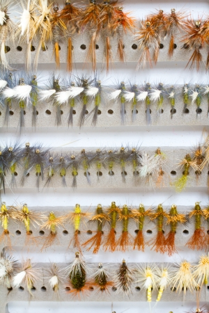 recreational pursuit: A fly fishing box of flies contains dry flies including caddis, bwo, adams, stone, and more in this abstract color image detail for the recreational pursuit
