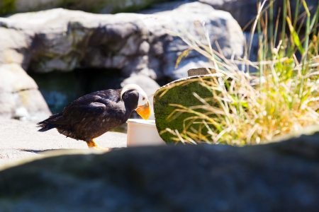 Some birds hang out and rest at the zoo. These birds are waterfowl that live in or near the ocean.