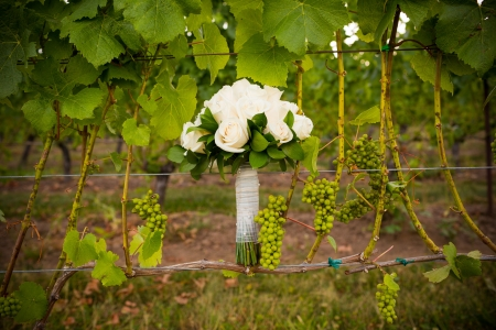 receptions: At a winery in Oregon the bouquet of a bride is mixed into the vineyard vines during sunset. Stock Photo
