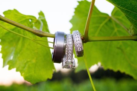 anillo de boda: Los anillos de una novia y el novio son fotografiados con un objetivo macro para mostrar el detalle de detalle de estas finas piezas de joyería.