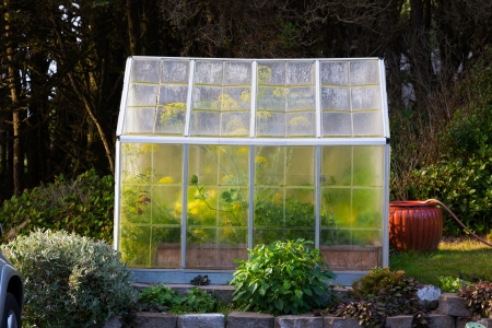 warm climate: A greenhouse or hothouse is photographed from the side showing the vegetables and plants growning inside this warm climate. Stock Photo