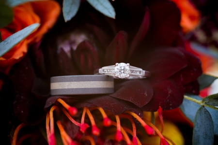 Wedding rings are placed on a dark red flower at this fall wedding. Stock Photo