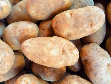 russet: Russet Potatoes at Produce Stand on Farm Stock Photo