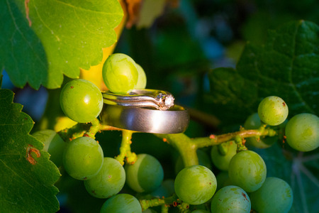 Two wedding rings together at a winery in Oregon, the rings are placed on some green grapes on the vine.