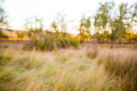 Image of a meadow for a portrait or other shot purposefully out of focus to create a shallow depth of field for an image overlay. Stok Fotoğraf