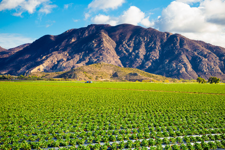 Strawberry field on a farm against some dramatic mountains make for a unique landscape image of Southern California.