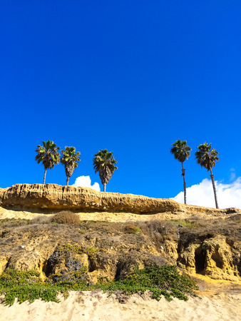 Tropical beach with four palm trees at the top of a cliff in Southern California.