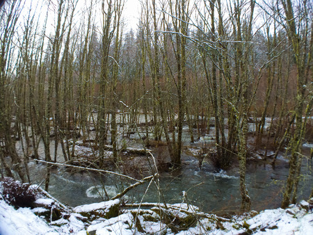 This Oregon river has burst its banks and is flooding the trees next to it in this nature weather image. 版權商用圖片