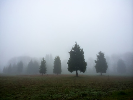 Foggy weather covers these four trees in this nautre oregon\ landscape.