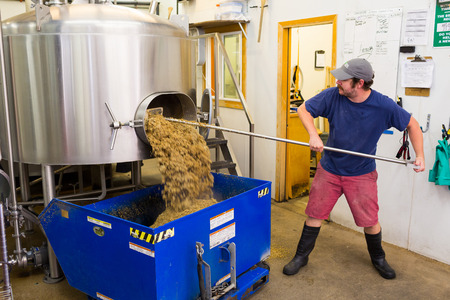 ipa: Eugene, OR, USA - July 17, 2014: Brewer at Oakshire Brewing making large quantities of Watershed IPA, a staple beer for this craft brewery.