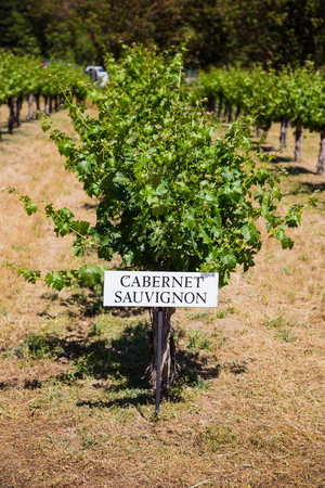 cabernet: Cabernet Sauvignon grapes are grown at this winery and vineyard in Southern Oregon.
