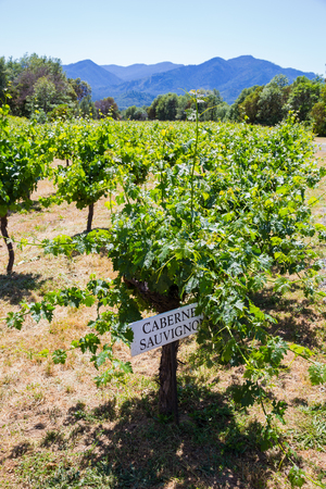 Cabernet Sauvignon grapes are grown at this winery and vineyard in Southern Oregon.