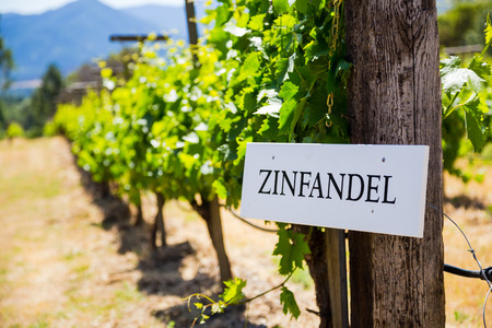 zinfandel: Zinfandel grapes are grown at this winery and vineyard in Southern Oregon. Stock Photo