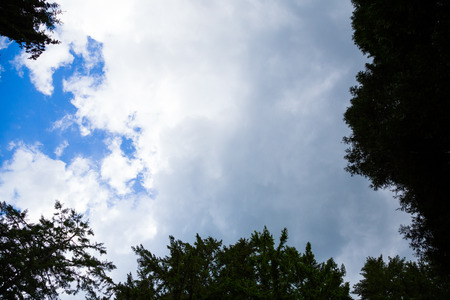 ciel avec nuages: Looking up is a series of clouds, blue sky and some trees creating simple copy space. Banque d'images