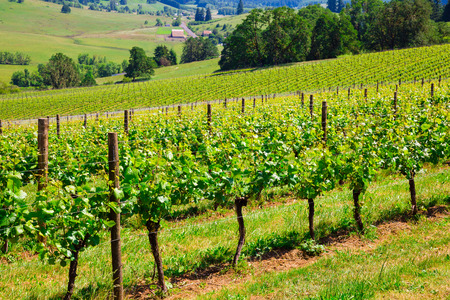 Landscape photo of a winery and vineyard in Western Oregon.