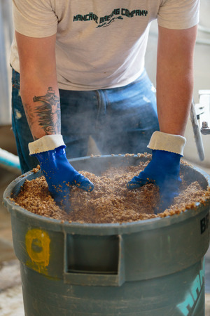 commercially: EUGENE, OR - NOVEMBER 4, 2015: Head brewmaster and brewery owner Brandon Woodruff examines a bucket of grain used for brewing beer commercially at the startup craft brewery Mancave Brewing.