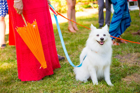 bearer: White dog with a blue leash is the ring bearer for a wedding reception.