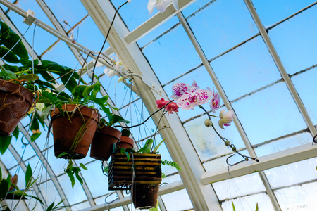 plantlife: Plantlife at the Conservatory of Flowers in San Franciscos Golden Gate Park.