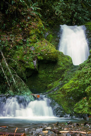 no name: Waterfall with no name in Oregon amidst lush green moss and plants.