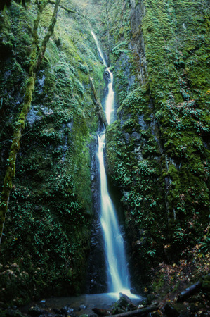 plantlife: Silver Falls state park in Oregon has miles of hiking to see vast waterfalls amidst lush plantlife in a natural setting.
