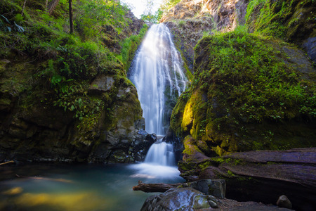national forest: Susan Creek Falls in the Umpqua National Forest. This waterfall is quite large and easily accessible. Stock Photo