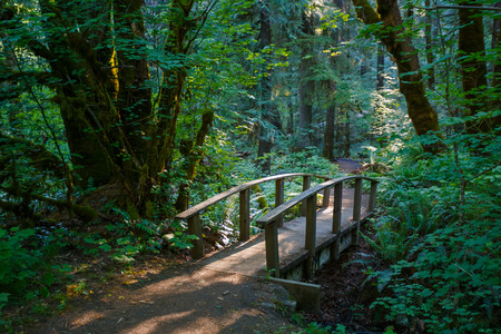 national forest: Umpqua National Forest improved trail hiking bridge to reach a waterfall destination.