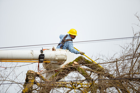 wood cutter: SPRINGFIELD, OR - FEBRUARY 16, 2016: Utility worker trimming a tree for power line access in Springfield Oregon.
