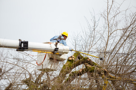 tree trimming: SPRINGFIELD, OR - FEBRUARY 16, 2016: Utility worker trimming a tree for power line access in Springfield Oregon.