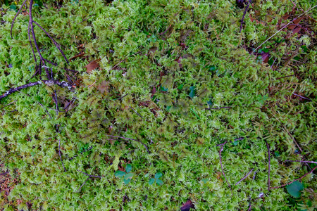 plantlife: Abstract texture of a moss plant in an Oregon forest.