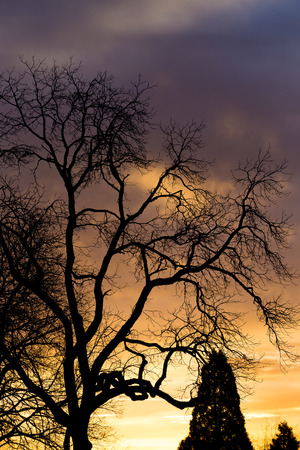 spooky tree: Sunset with a spooky tree against the sky in Oregon.