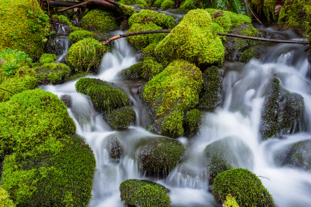 watershed: Small waterfall cascade flowing into the McKenzie River in Oregon.