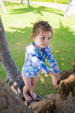 Tree Climbing Hawaii
