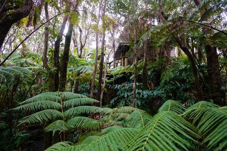 Hawaii Rainforest Treehouse Detail