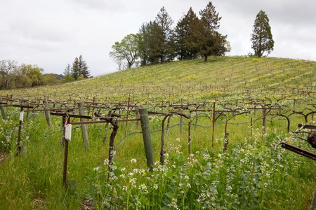 Winery in Sonoma Valley California During Spring