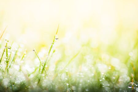 Fresh morning dew on green grass, macro water drops on grass, close up nature background