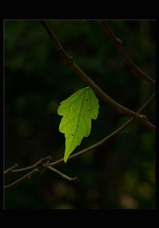 빛나는 잎