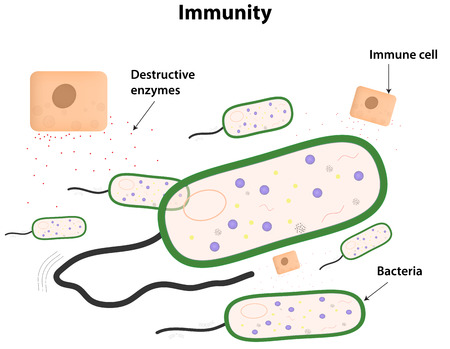 staphylococcus: Immunity Illustration