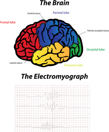 neurone: The Brain and Electromyograph Illustration