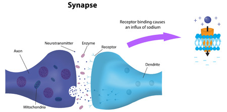 Synapse and Receptor Иллюстрация