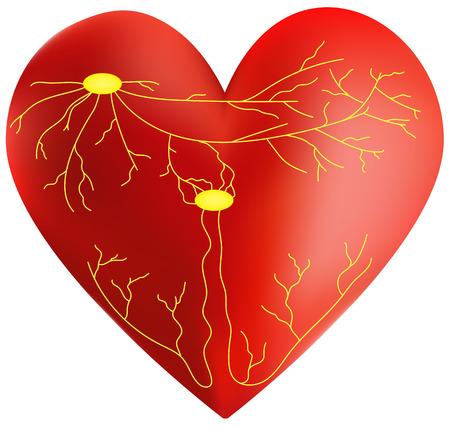 myocardium: Sistema del Cuore Conduzione Vettoriali