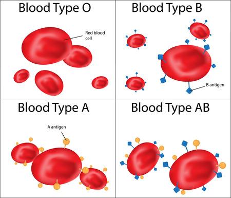 Bloedgroepen ABO gelabelde