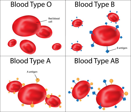 Blood Groups ABO Labeled