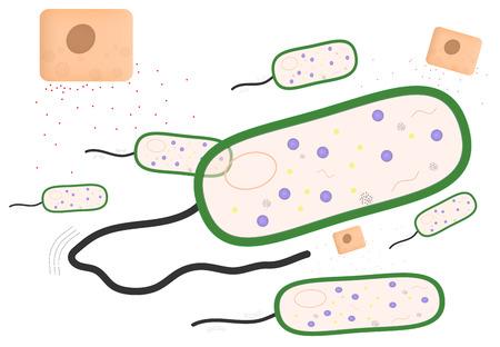 inmunidad: Inmunidad