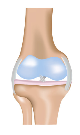 meniscus: The Knee Joint