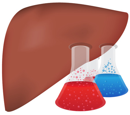 hepatitis vaccination: Liver Hepatic Research