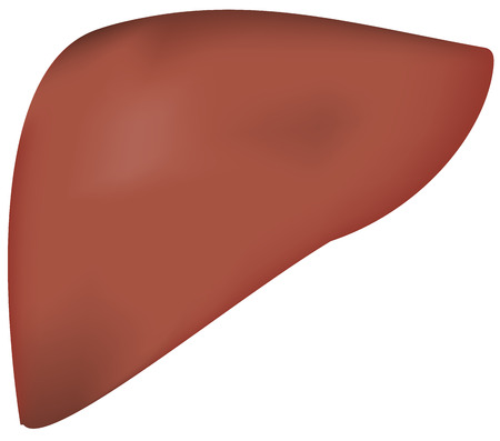 hepatitis vaccine: Liver