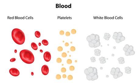 Componentes de la sangre Foto de archivo - 31446972