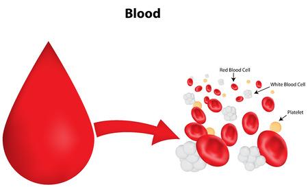 labeled: Blood Drop Labeled Diagram Illustration